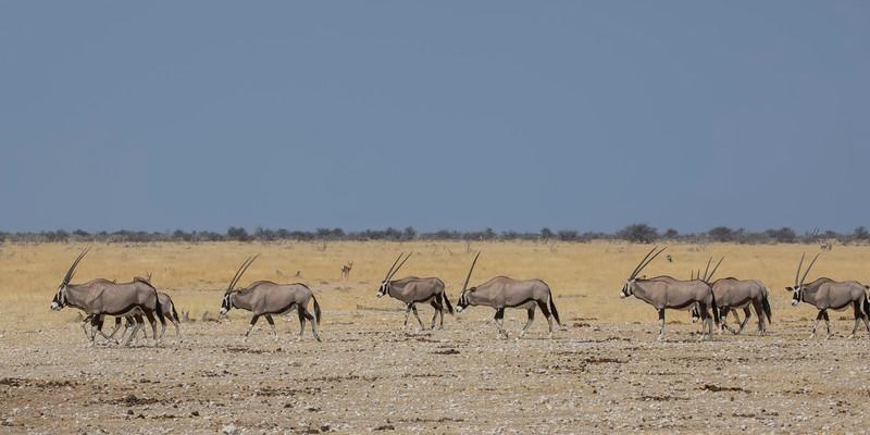 Namibia 69A9230.jpg