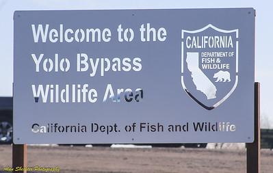 2018-01-06: Yolo Bypass Wildlife Area, Davis, CA