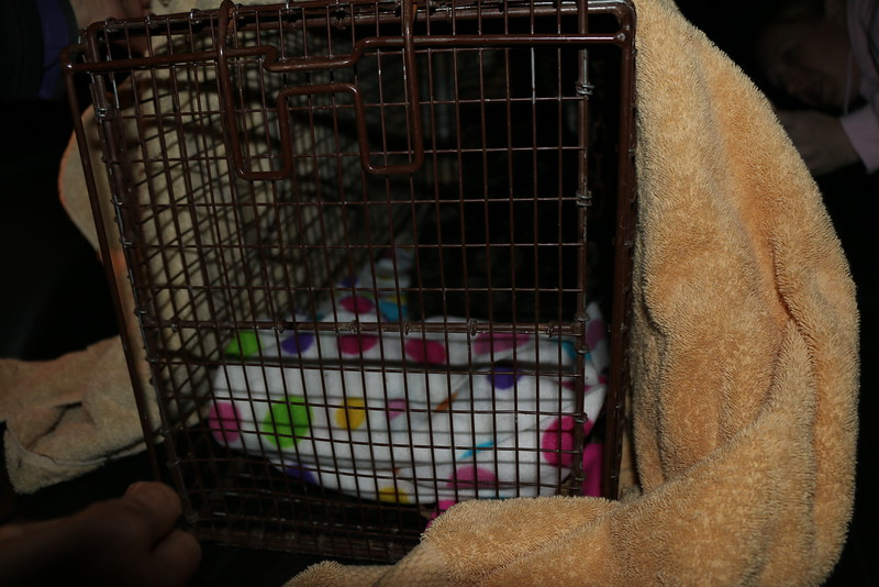 Trapping Mom and Kittens - 040115 - 14.JPG