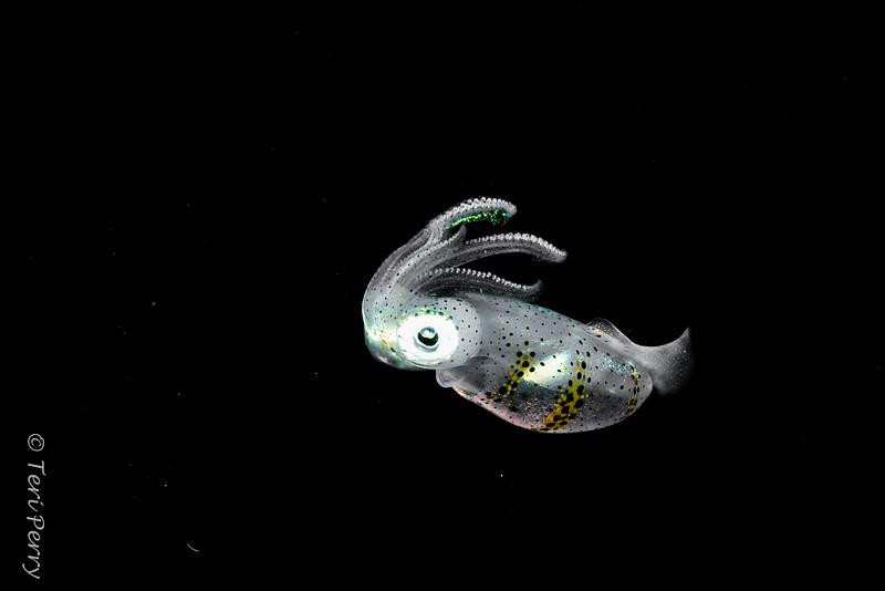 BLACKWATER - Squid-0122-Edit.jpg