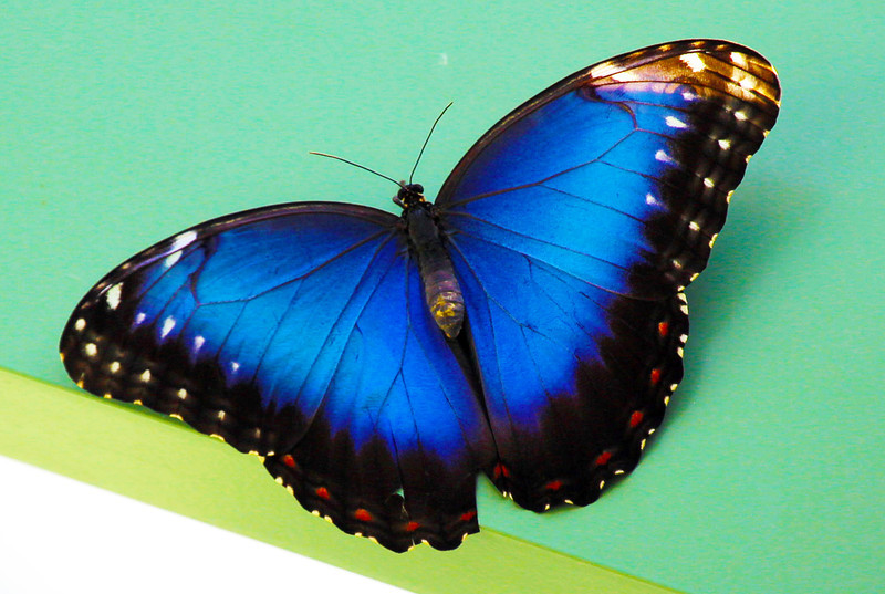 ... and the deepest Prussian blue.