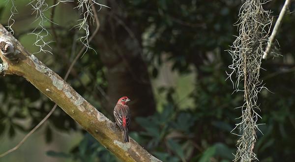 Birds at 309RR 01-2020