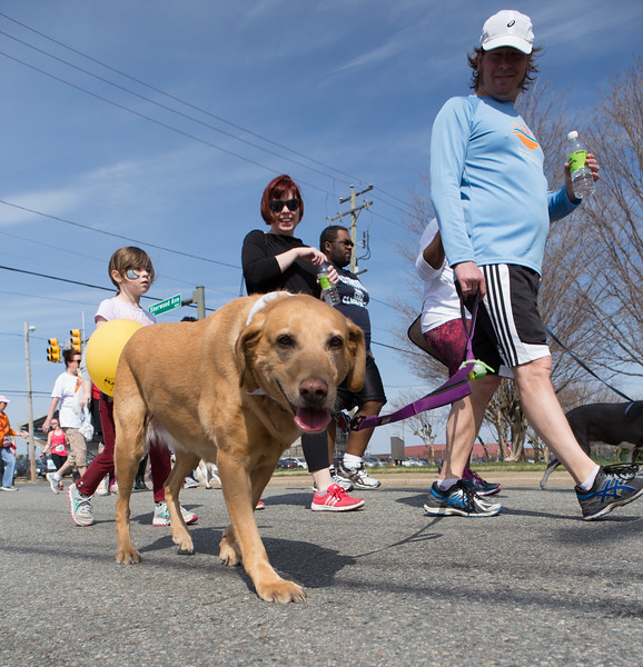 15thRichmondSPCADogJog-478.jpg