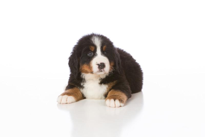 2013-Pearson Pups-Jun02-0254.jpg