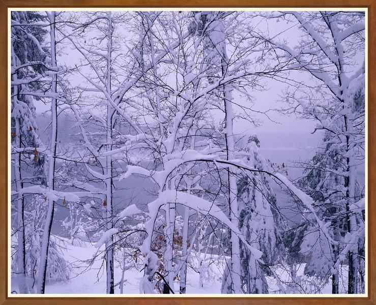 Walden Pond After Snowfall