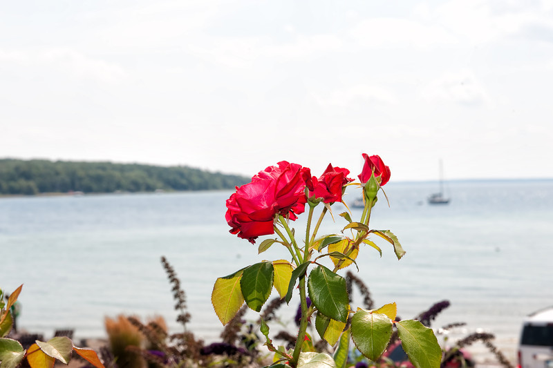 071 Michigan August 2013 - Flower By Shore (Wine Tour).jpg