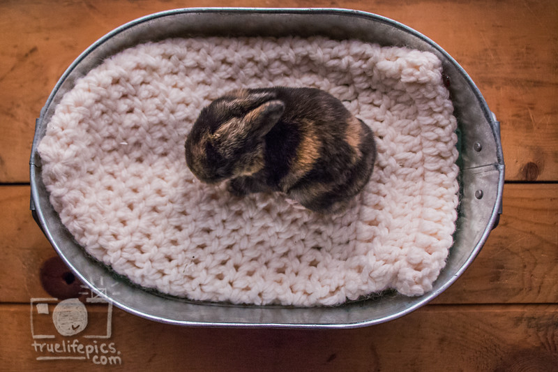 20160815 11 day old bunnies (51).jpg
