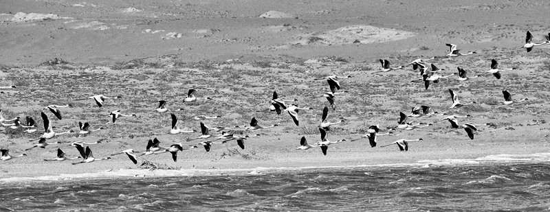 DSC_0982 Flamingos.jpg