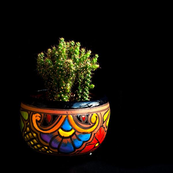 cactus 062720-.jpg
