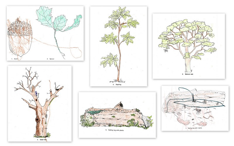 Cycles of Nature Curriculum