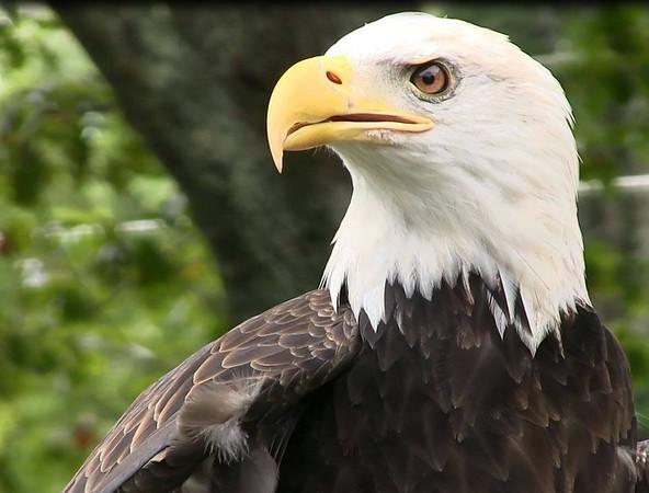 Ash Missing Eagle PHOTO::2