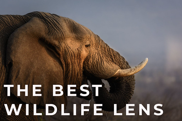 What is the Best Lens for Wildlife Photography