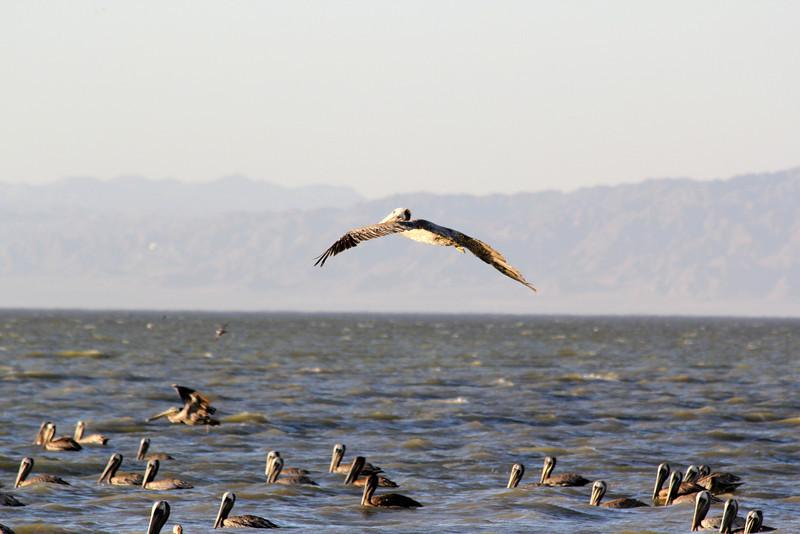 04 The Salton sea (28).JPG