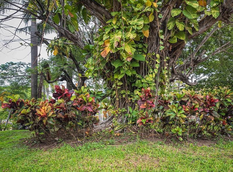 Maagnificent tree
