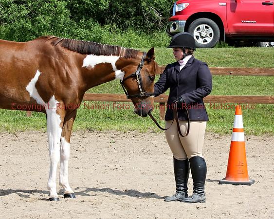 2017 4-H Horse Show
