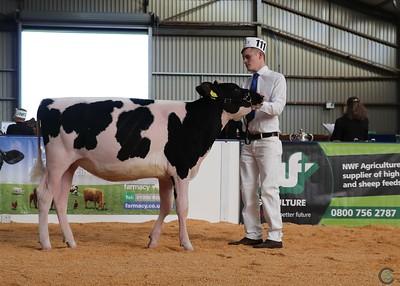 All Breeds All Britain Holstein Calf Show 2018