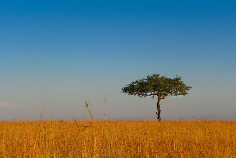 Uganda- Kenya 2013 (449 of 710).jpg