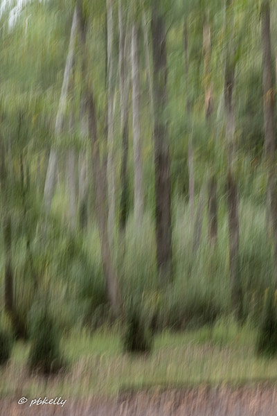 Foggy, so I played with abstracts of the trees.