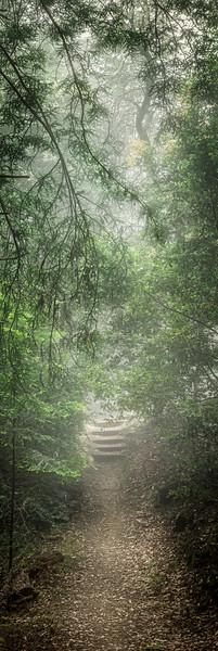 Foggy Path, Sea Ranch, California