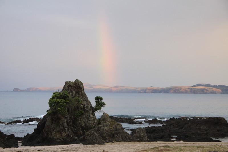 Kauri rainbow