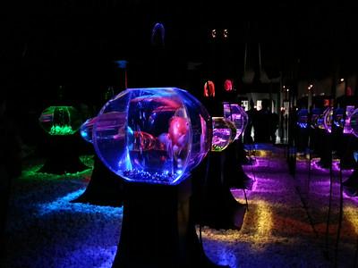 Art Aquarium 2014