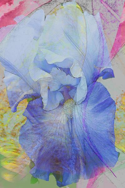 FlowerArt_IrisGarden_0577.jpg
