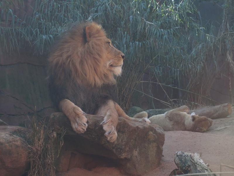 Sydney - Sydeny Zoo-100.JPG