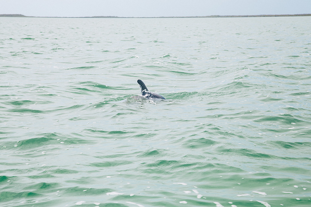 Eco-Friendly Tours and Excursions in Mexico - Dolphin watching