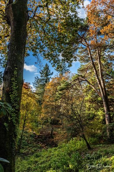 Wakehurst_Autumn-6105.jpg