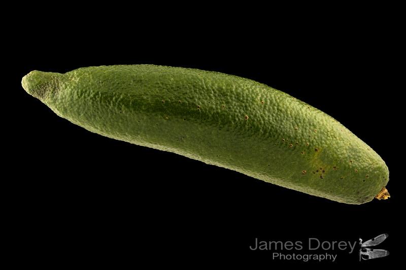 Green Finger Lime 8p 100mm 1-3.jpg