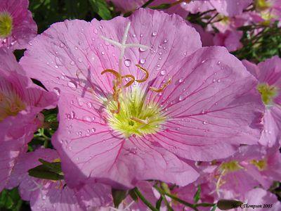 Bugs, Flowers & Plants