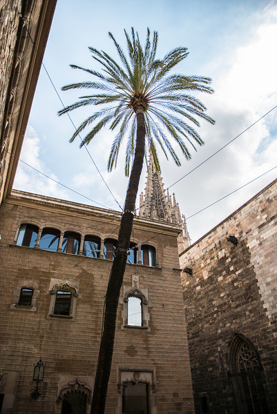 200 Year old Palm tree outside of Barcelona Cathedral