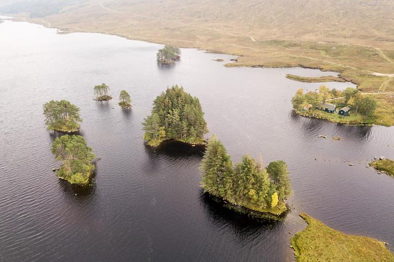 Scots Pines in Loch Ossian