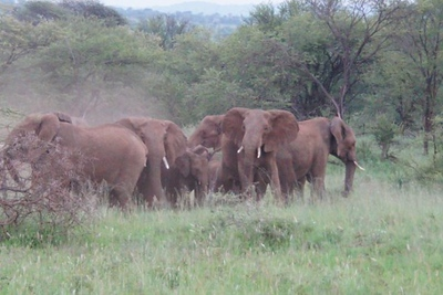 1494239976African-Safari-56.jpg