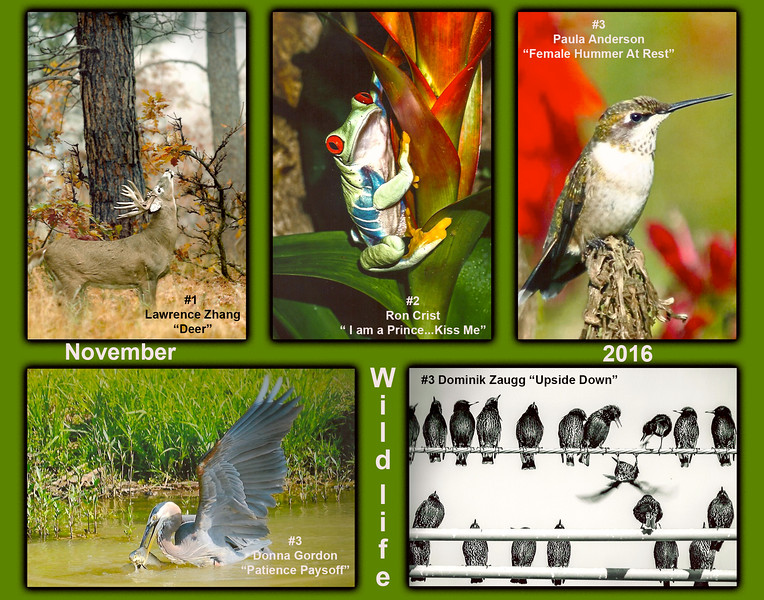 Wildlife Composite (1).jpg