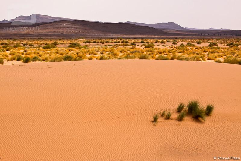 Le désert aux abords de l'Oasis de Figuig