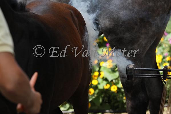 Branding the Foals