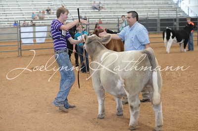 Steer Ringshots - Exotic and Grand Drive