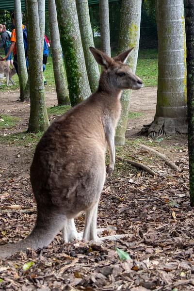 Australia_202.jpg