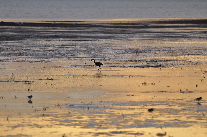 Evening low tide