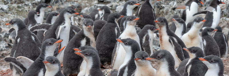 2019_01_Antarktis_01314.jpg