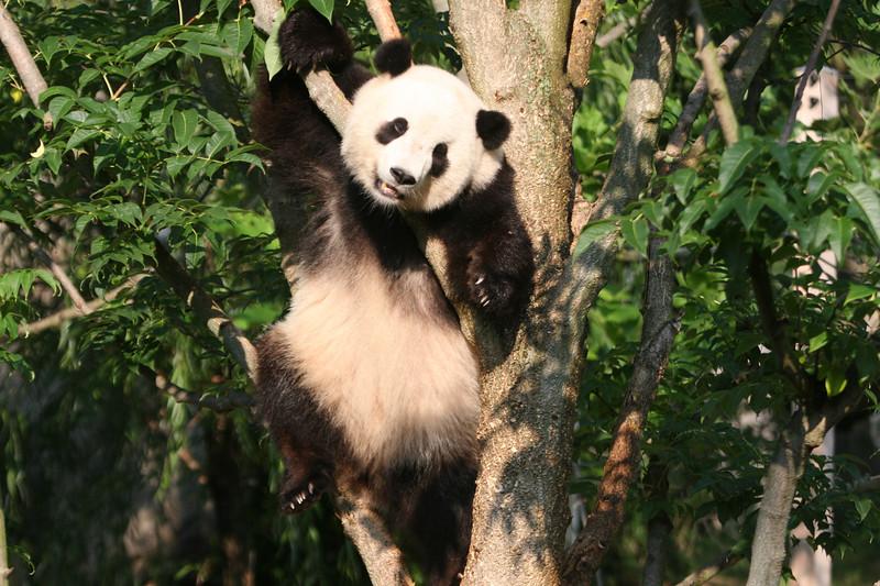 Panda072807_049.JPG