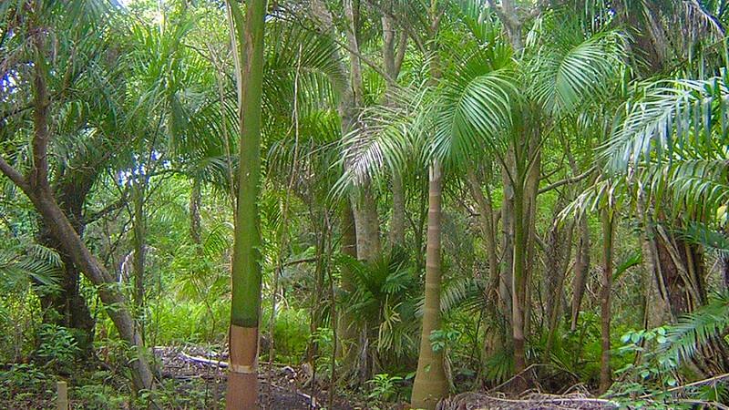 Exotic Trail Hugh Taylor Birch