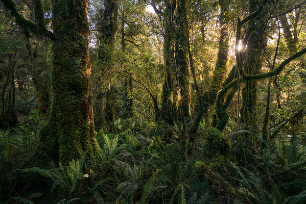 """Arboreal Australis"""