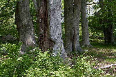 Tree Walk with John Campanini