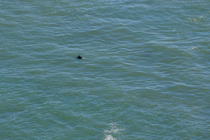 Dolphin???