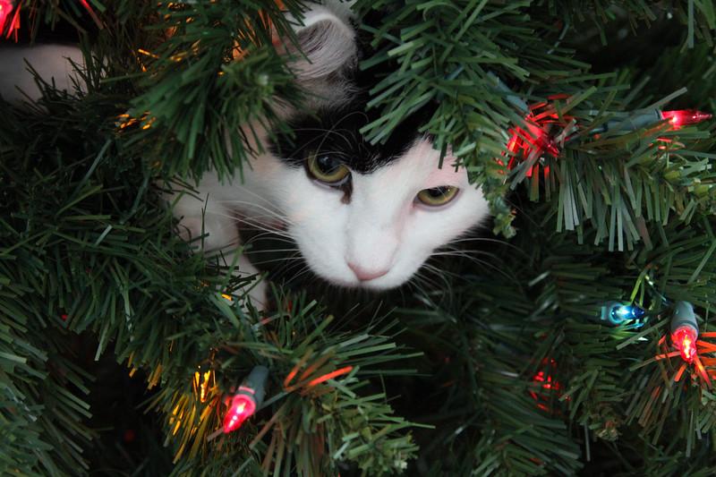 Buddy Christmas (11 of 26).jpg
