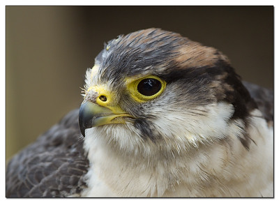 2007 Hawk Conservancy Trust