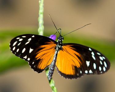 Butterfly Conservatory - Nov 2008