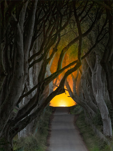 Harold Hall.Dark Hedges.AA19.O.jpg